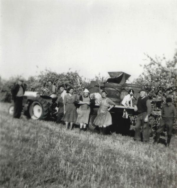 Vendange vins aoc touraine azay le rideau histoire archive